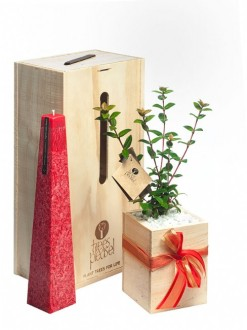 candle scentsation tree gift box image
