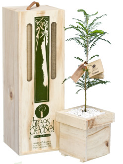 kowhai tree gift box image