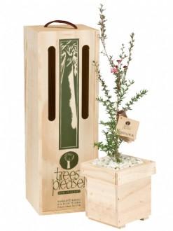 Manuka Tree Gift image