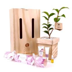 Linden Leaves Cracker Gift Box image