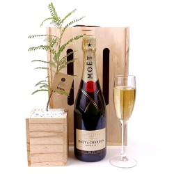 Moet