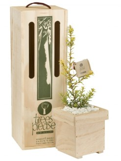 golden totara tree gift box image