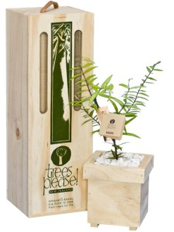 kauri tree gift box image