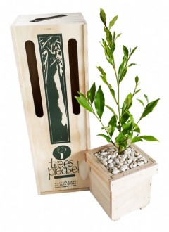 magnolia tree gift box image