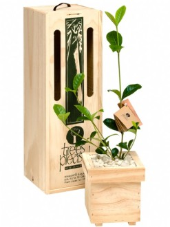 gardenia tree gift box image